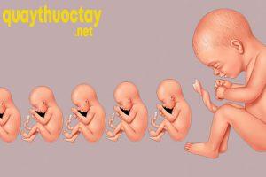 Tìm hiểu về các giai đoạn phát triển của thai nhi
