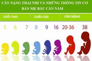 Cân nặng thai nhi và những thông tin cơ bản mẹ bầu cần nắm
