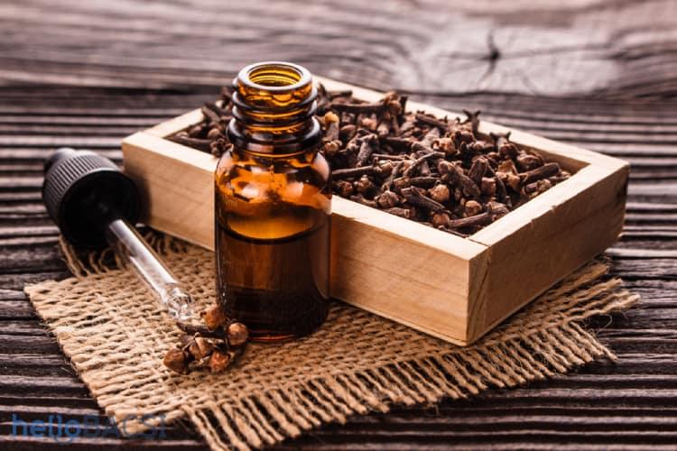Tinh dầu đinh hương chữa chảy máu chân răng