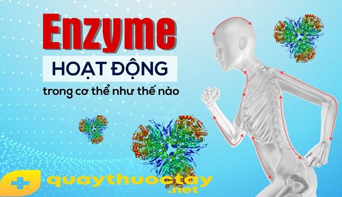 Cơ chế hoạt động của enzyme là gì?